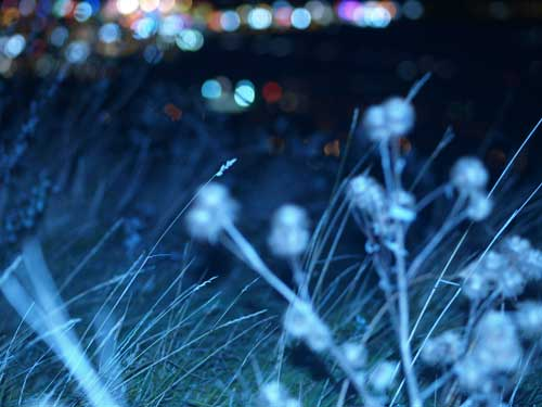 Photo nocturne herbe haute parc urbain